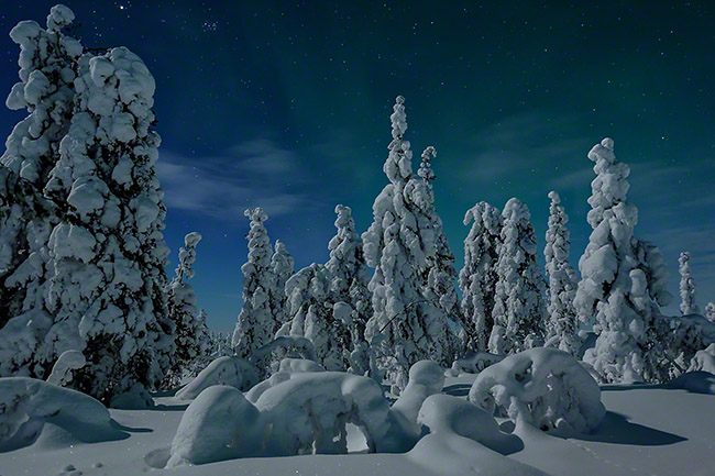 Snow-covered trees in moonlight