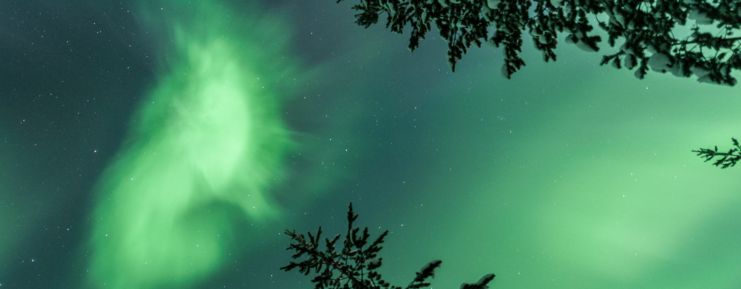 Auroras above treetops