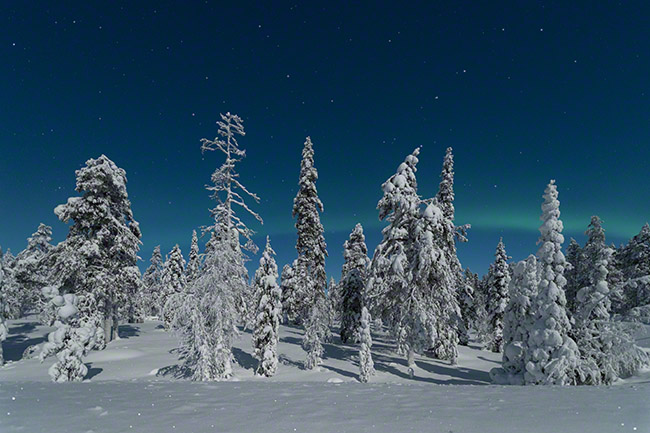 Winter wonderland scene with a bit of aurora