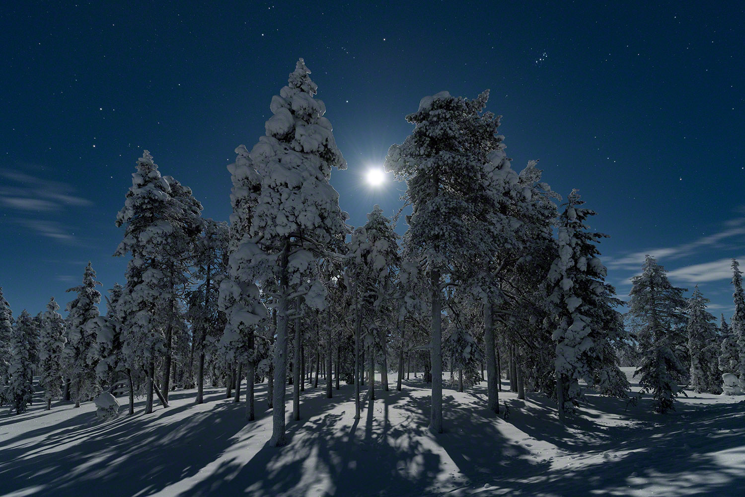 Moonlight fairytale forest