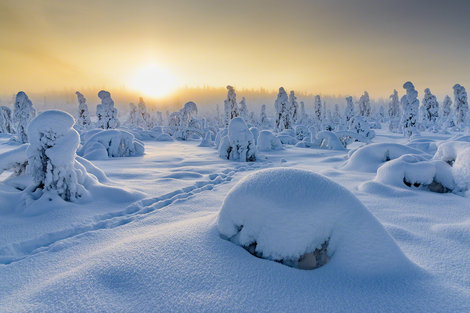 Winter sunrise in Lapland
