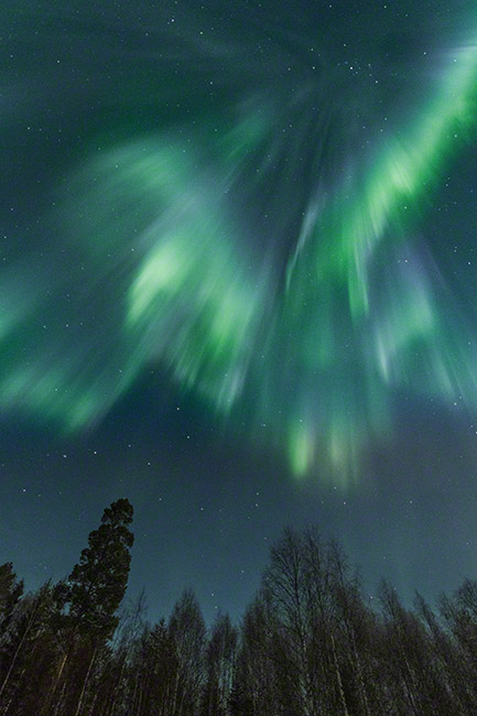 Northern lights corona above trees