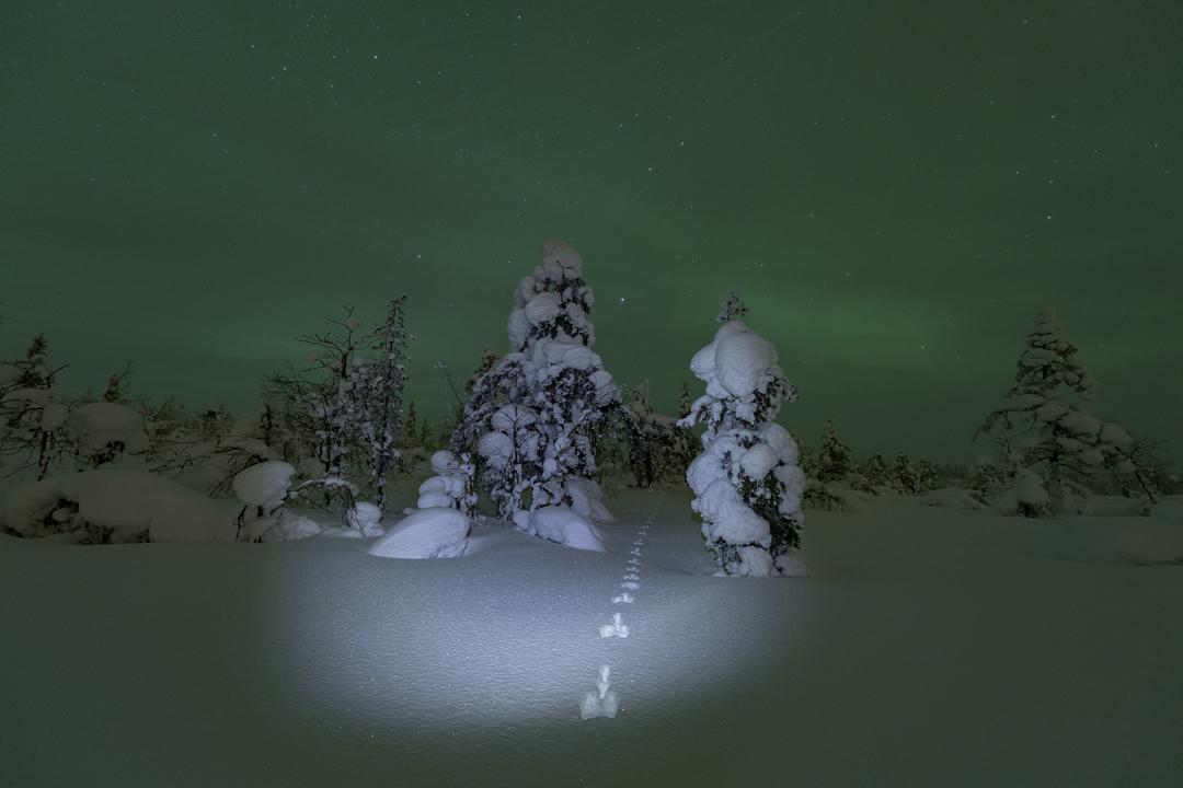 Snowfall with Northern lights