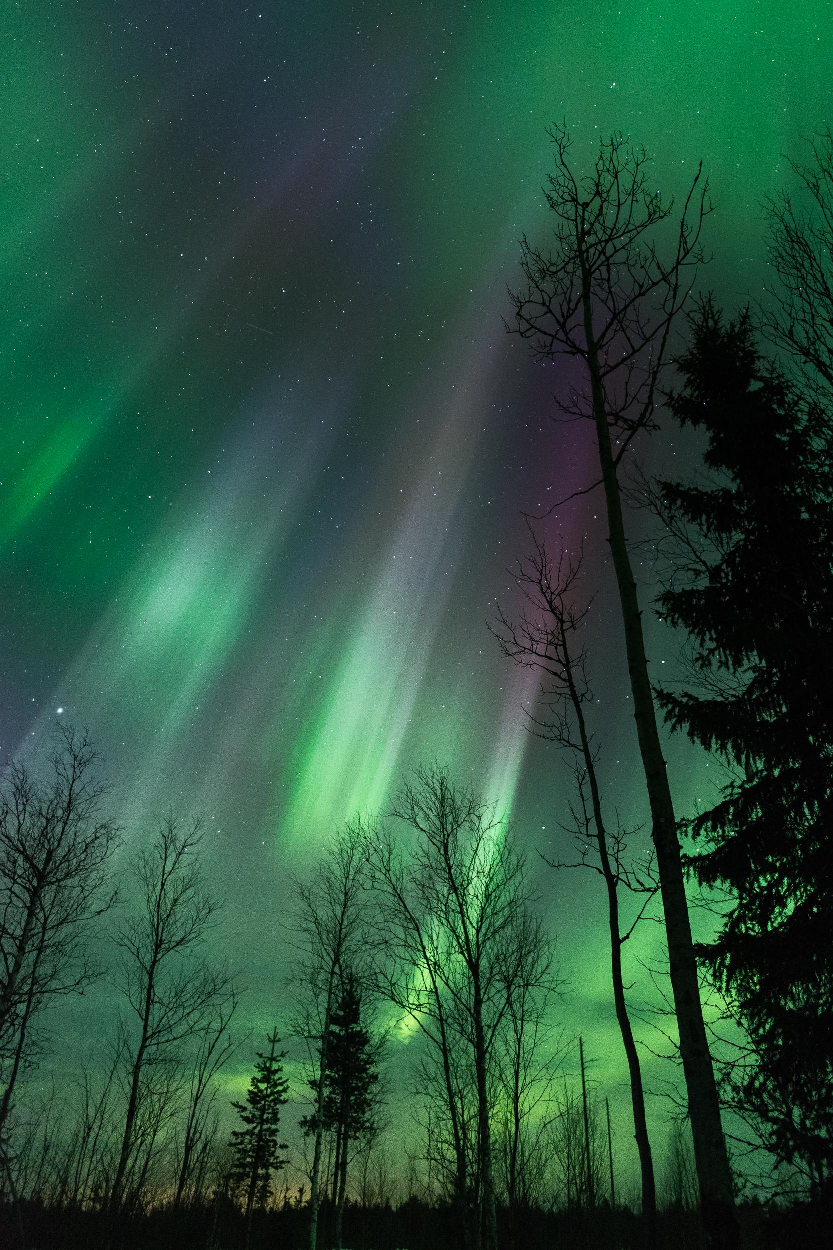Polarlicht Basecamp September - Durch Bäume