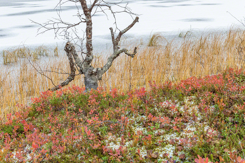 Winter & Herbst